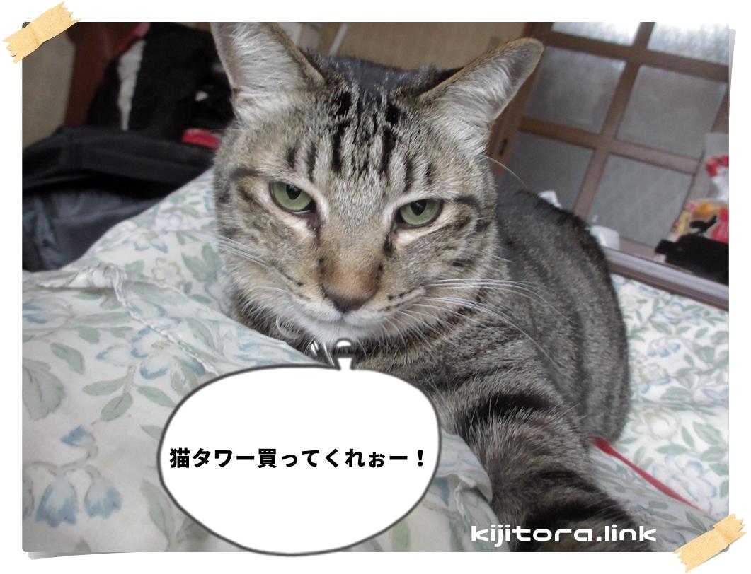 猫タワー買ってくれぉー!