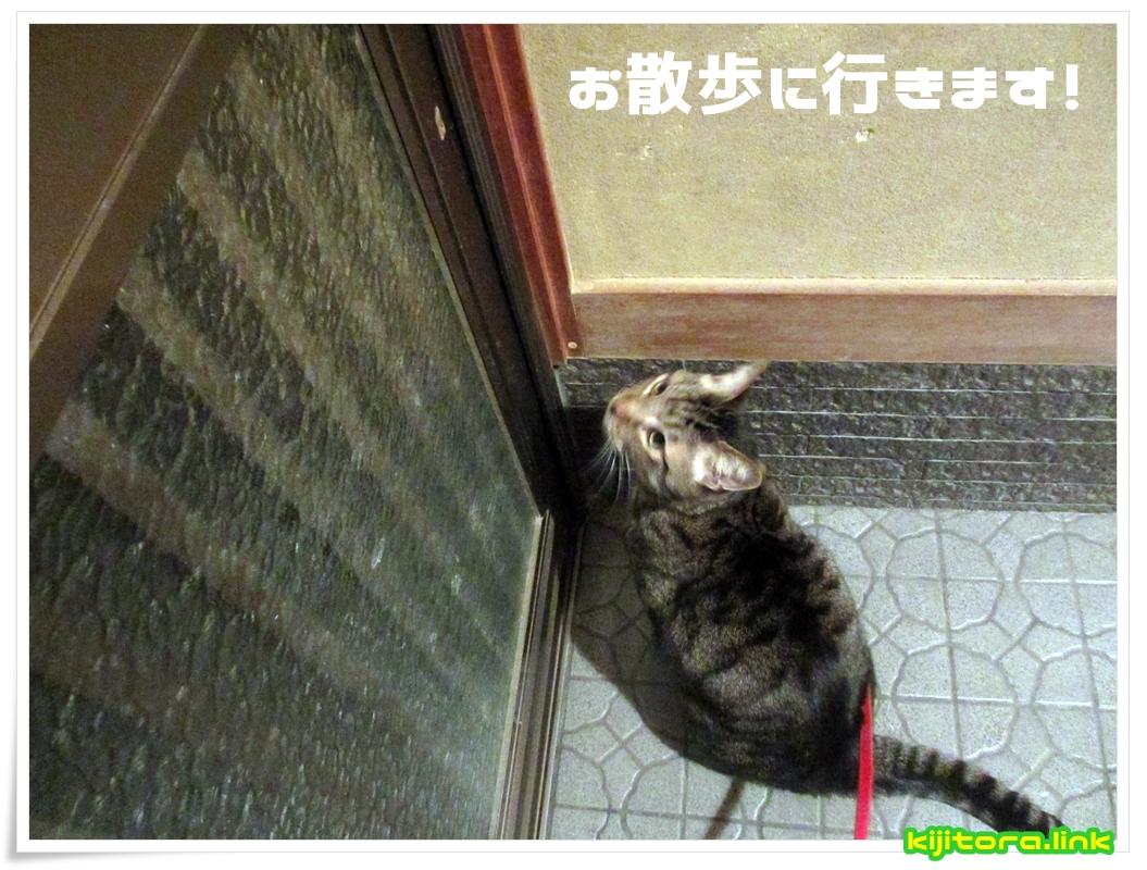 猫ですが、お散歩に行きます!