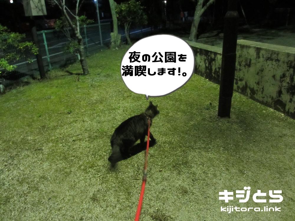 夜の公園を満喫します!.