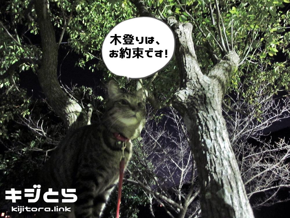 木登りはお約束です