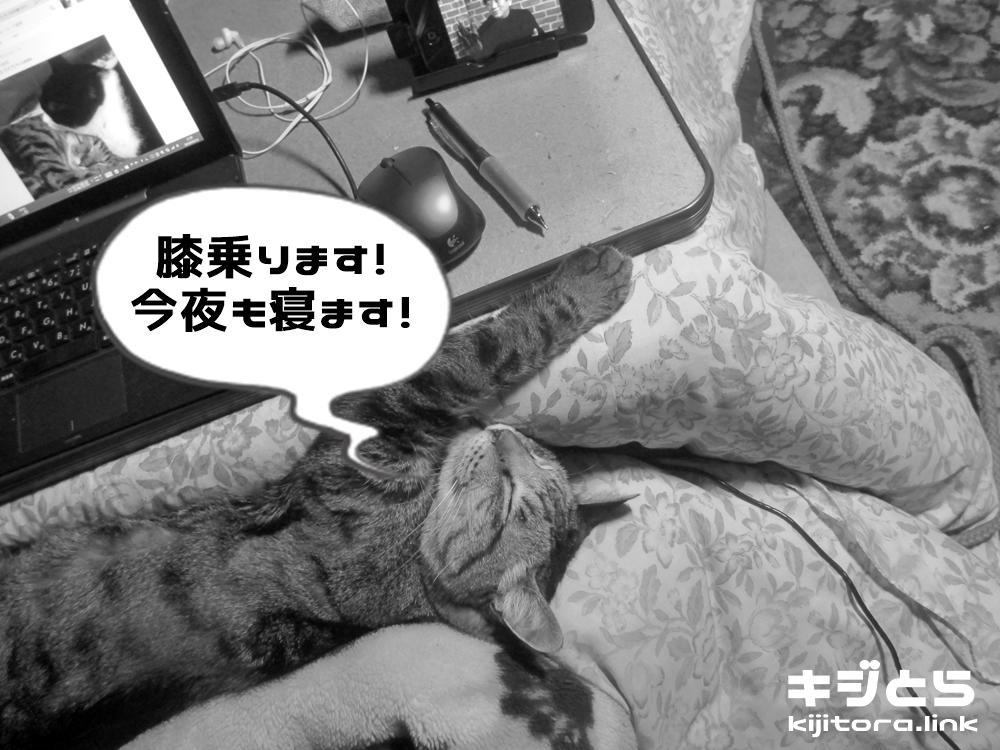 猫が膝の上で爆睡開始!する事無いのでアレしてやった。TOP