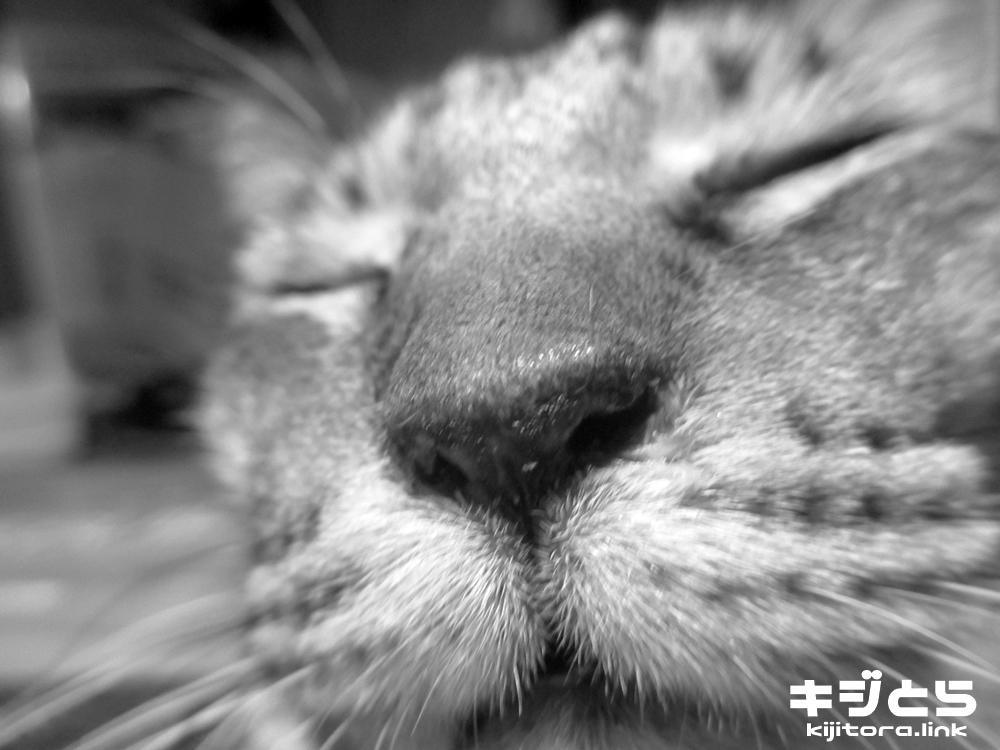 一回だけよ!キスする猫