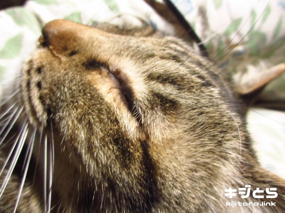 猫が膝の上で爆睡開始!する事無いのでアレしてやった。その2