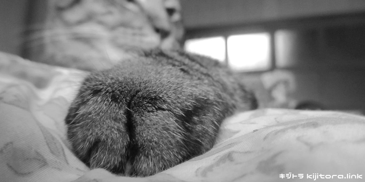 キジトラ猫 016