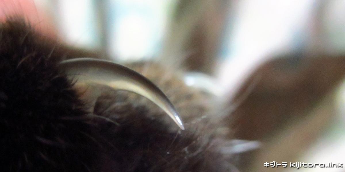 キジトラ猫 003