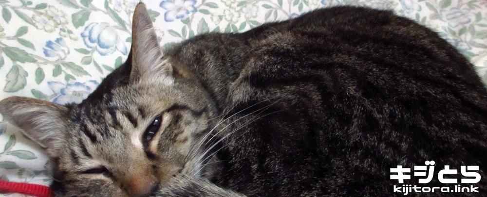 猫の爪、伸びました 転がる猫