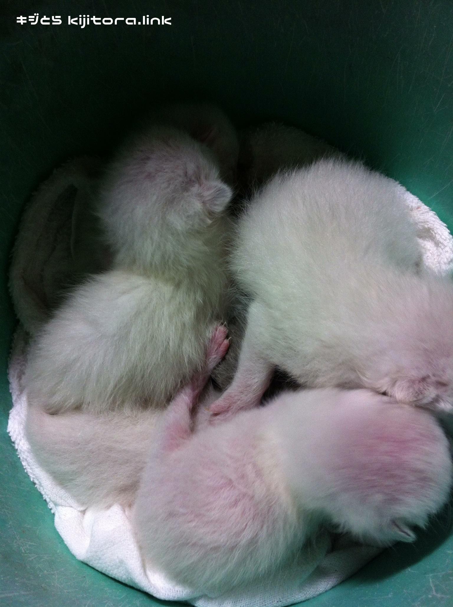 捨て猫(白グループ)