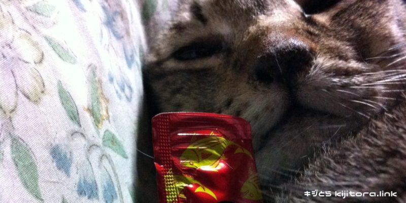 ちゅーるを抱きかかえるキジトラ