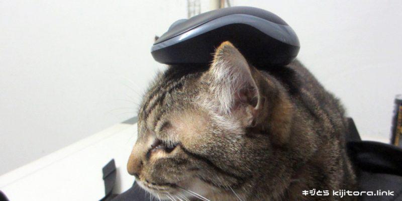 マウスを頭に乗せた猫