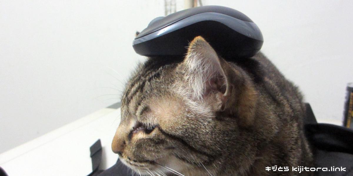 マウスを頭に乗せたキジトラ猫