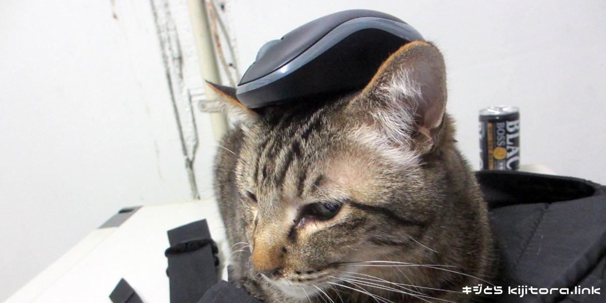 マウスを頭に乗せたキジトラ猫(乗せてみた)