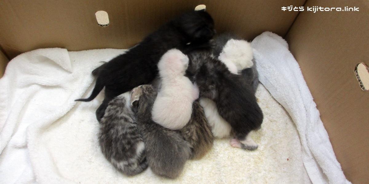 11匹の捨て猫たち