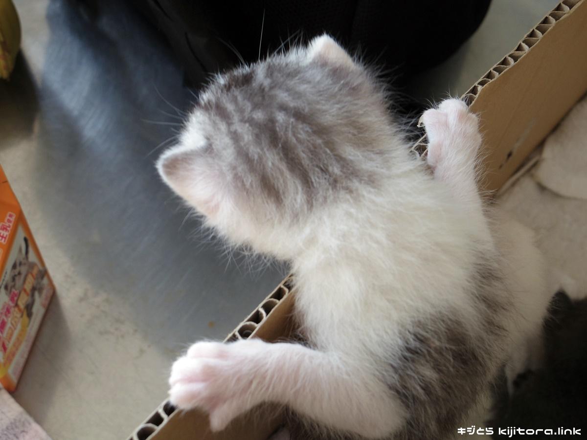 仔猫の写真 2016年5月4日 21