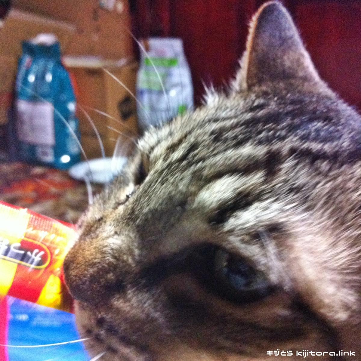 ちゅーるに喰いつて放さない猫(3本目)