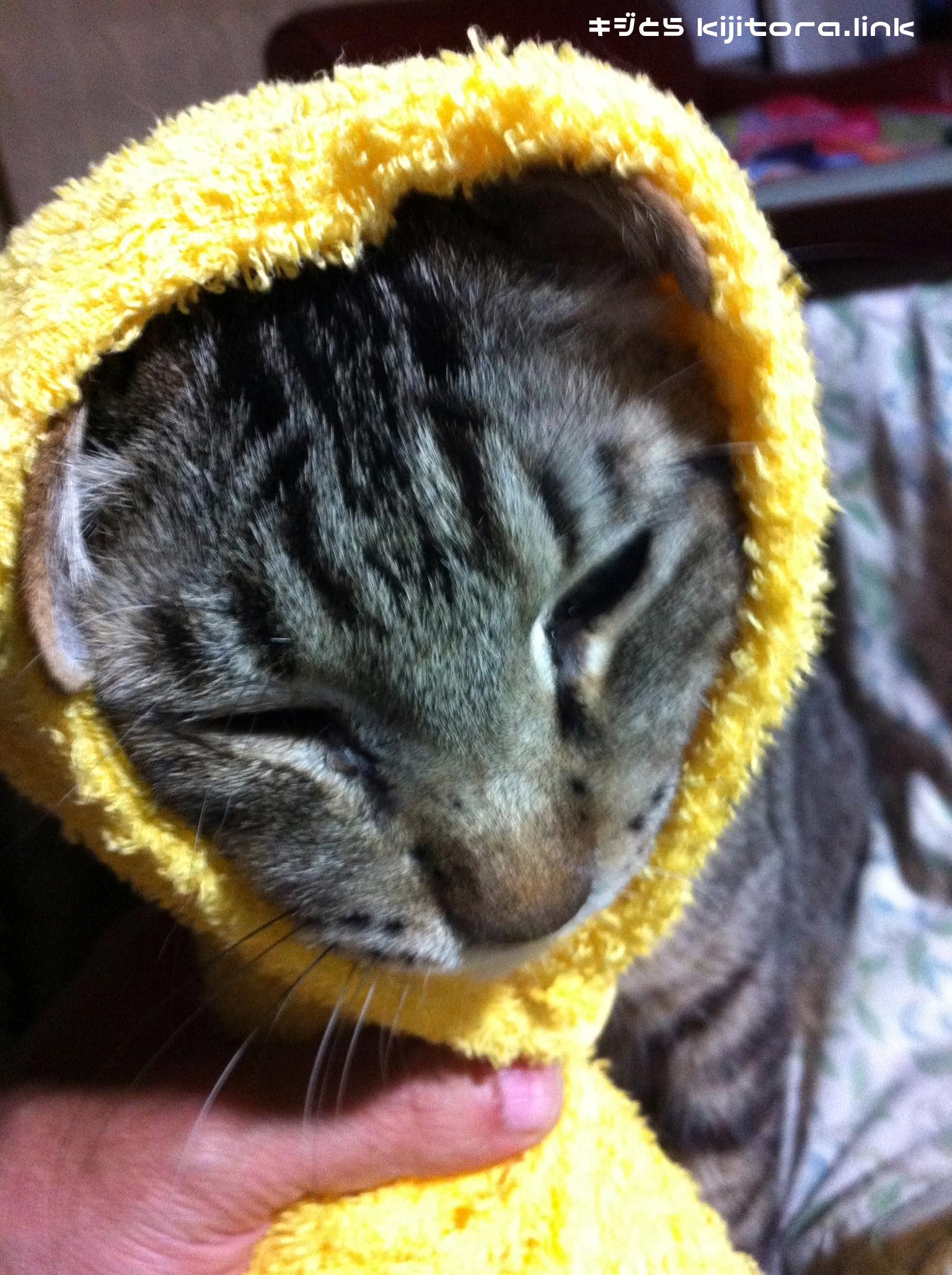 キャベツ猫のリハーサル