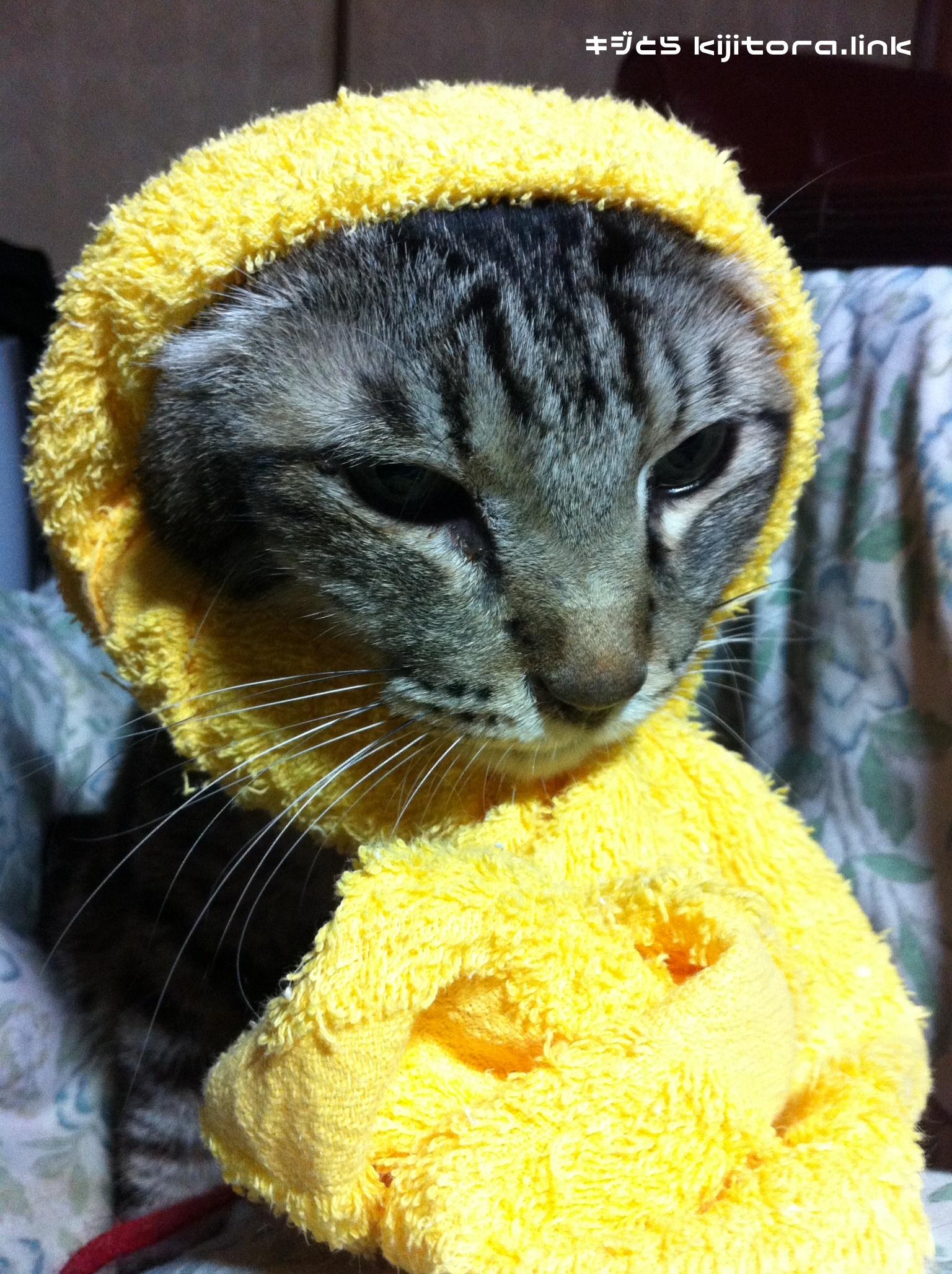 キャベツ猫か?泥棒猫か?