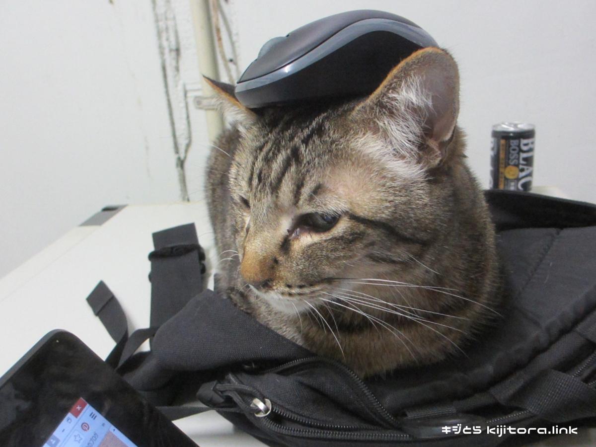 初めての仕事場(マウス乗せた)