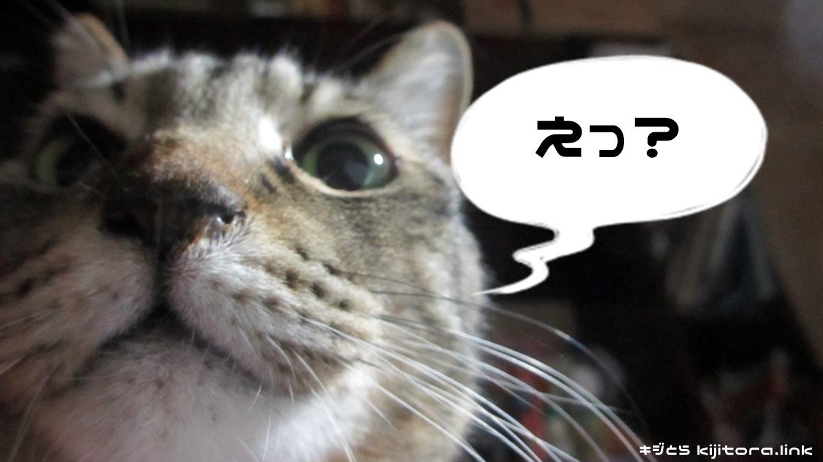 「えっ?」返事に困るキジトラ猫