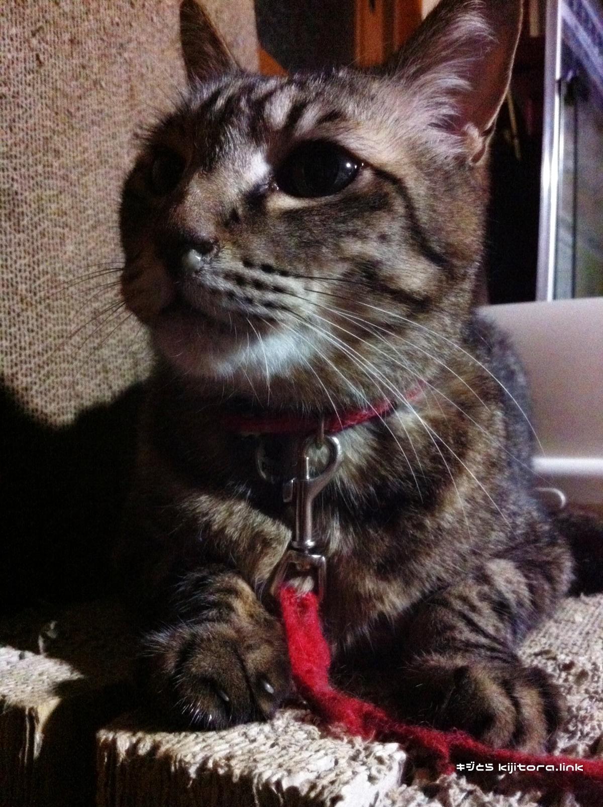 鼻水たらしてる猫