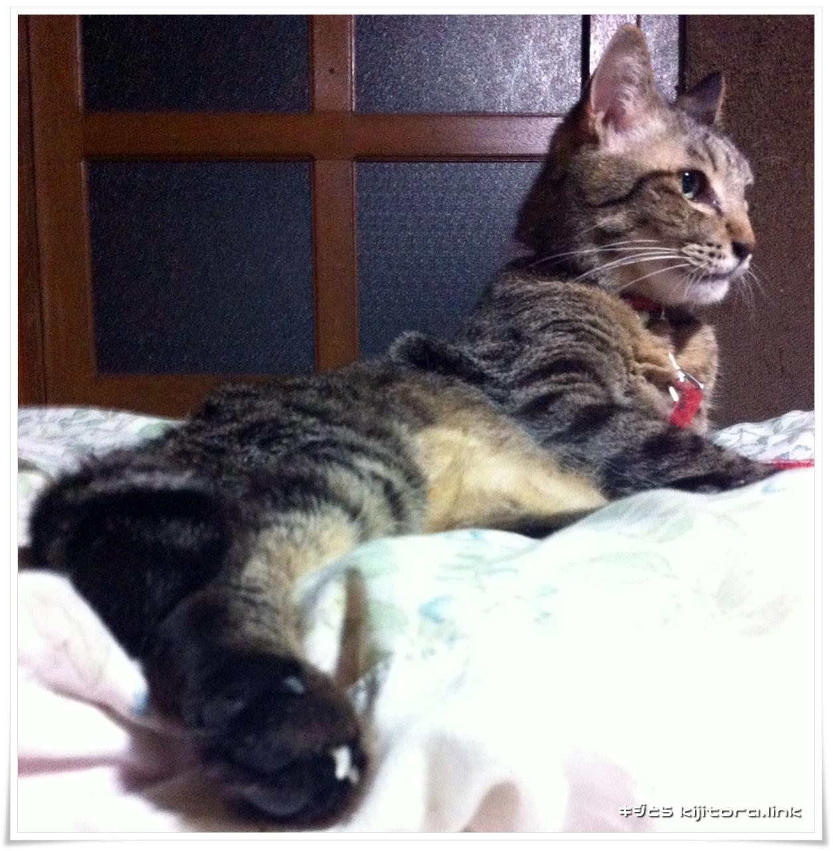 御寛ぎ中のキジトラ猫