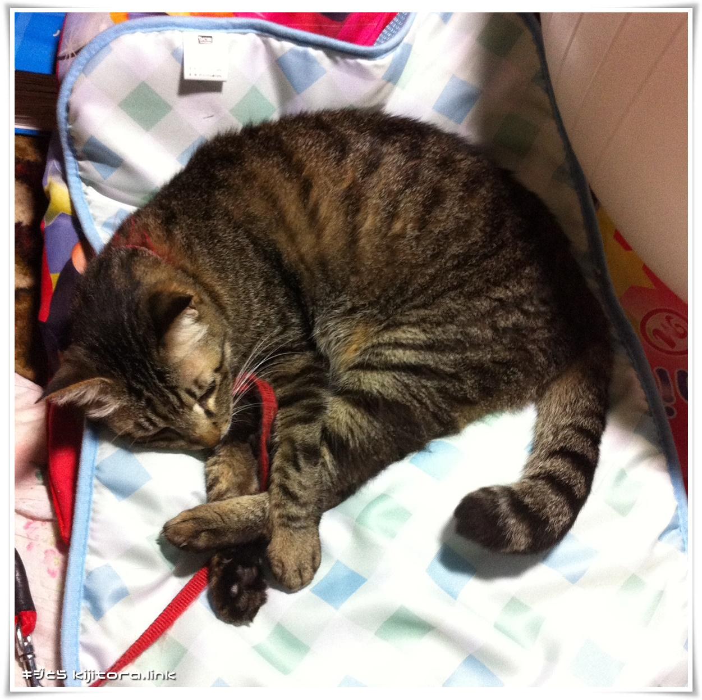 猫の為の冷却マット フィフィスインパクト