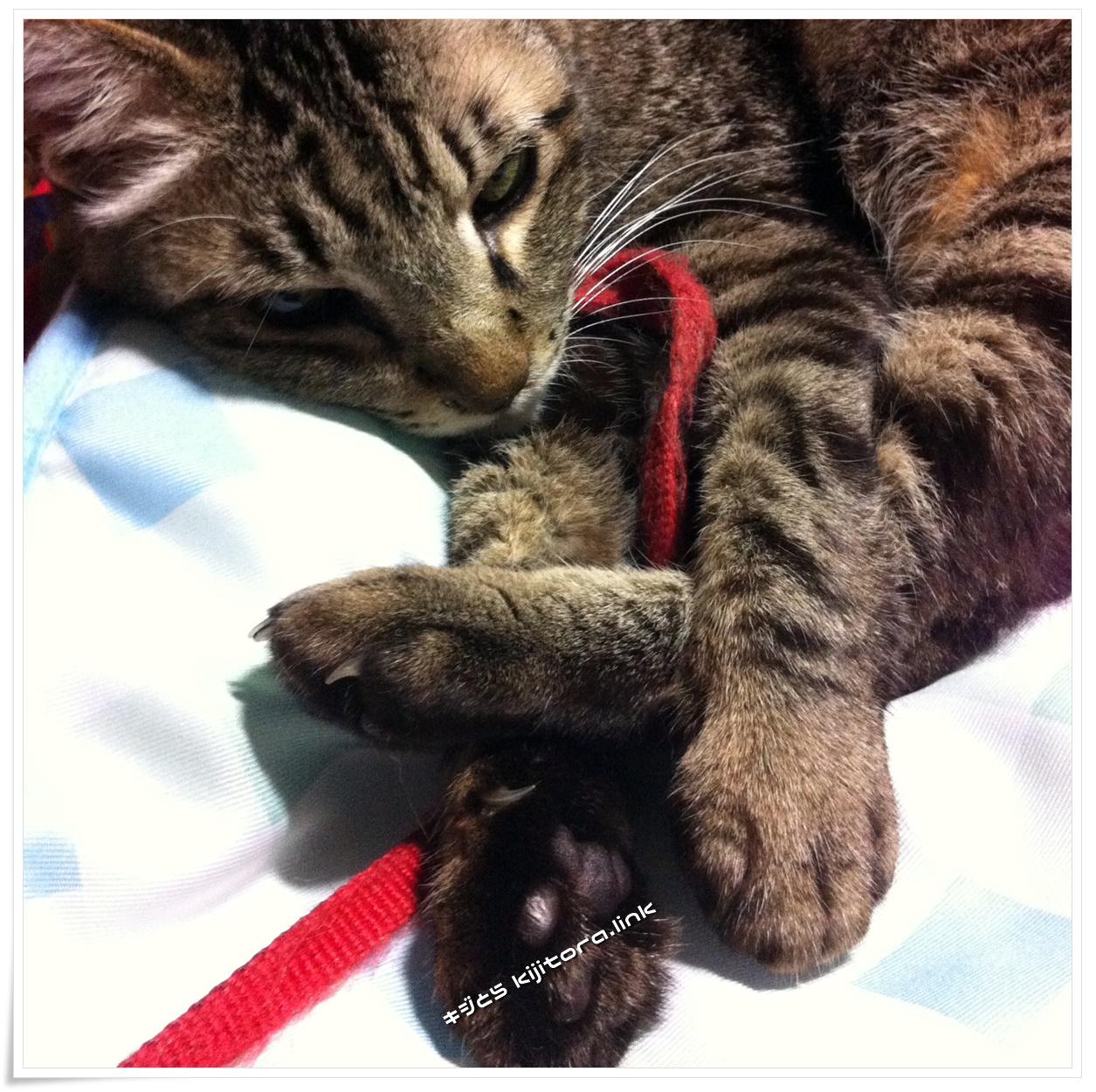 猫の為の冷却マット フィフィスインパクト2