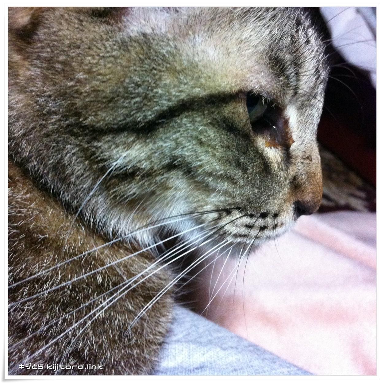 猫の為の冷却マット 一時休憩