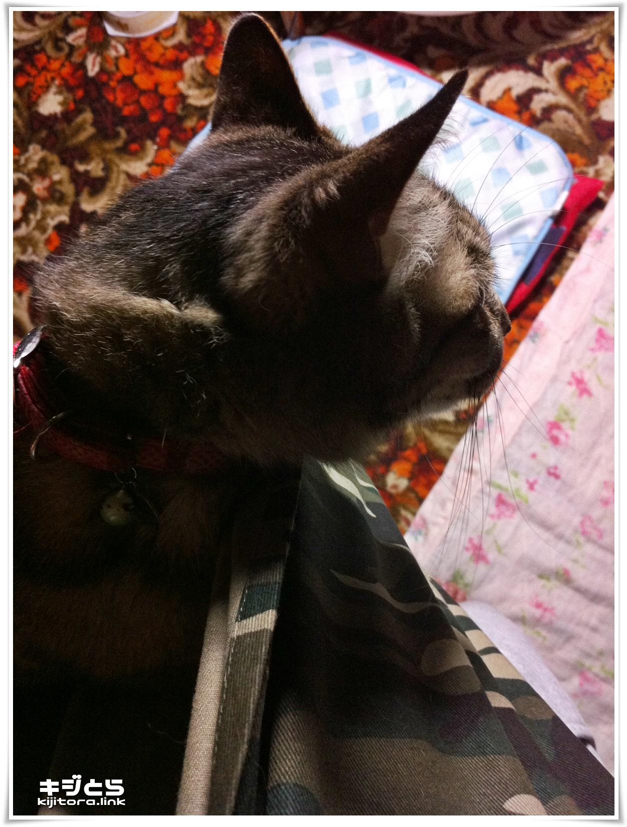 ペット スリング バッグ 犬 猫 肩こらない コンパクトに収納