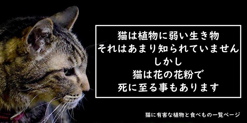 猫には毒です