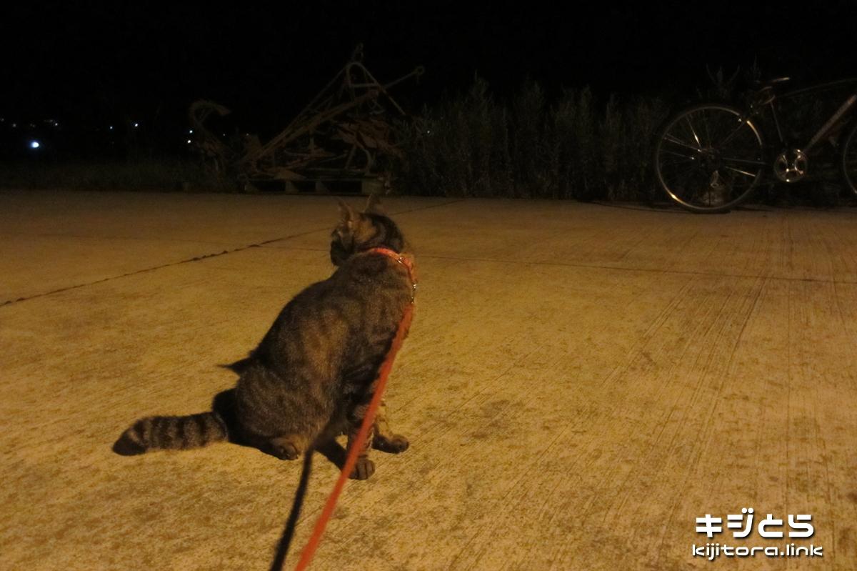 2016-07-06 漁港で猫のお散歩、でも、歩かない