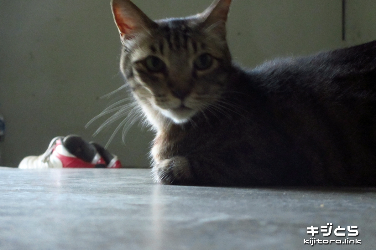 2016-07-09 夕方になって元気出た猫