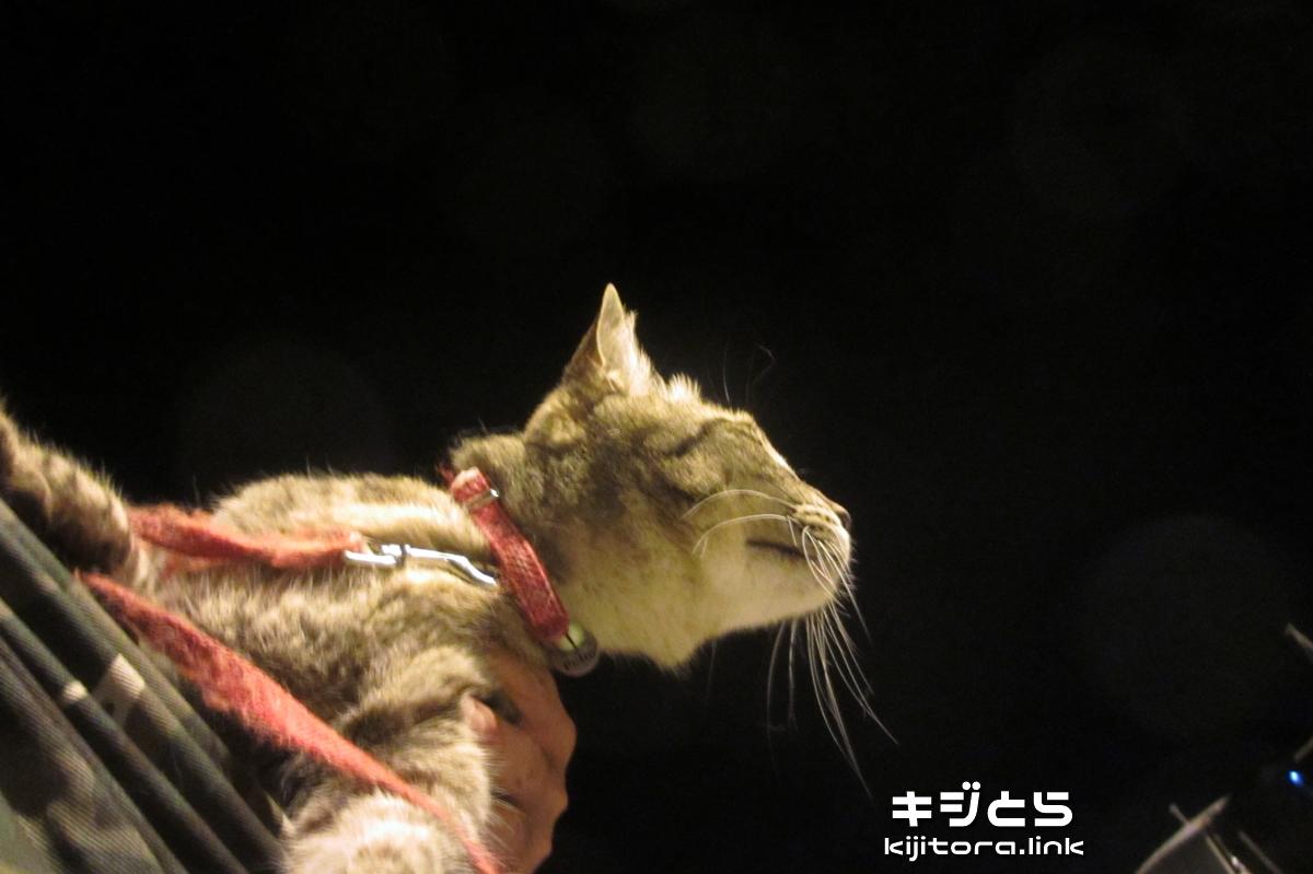 2016-07-06 一筋の光を見つけた猫