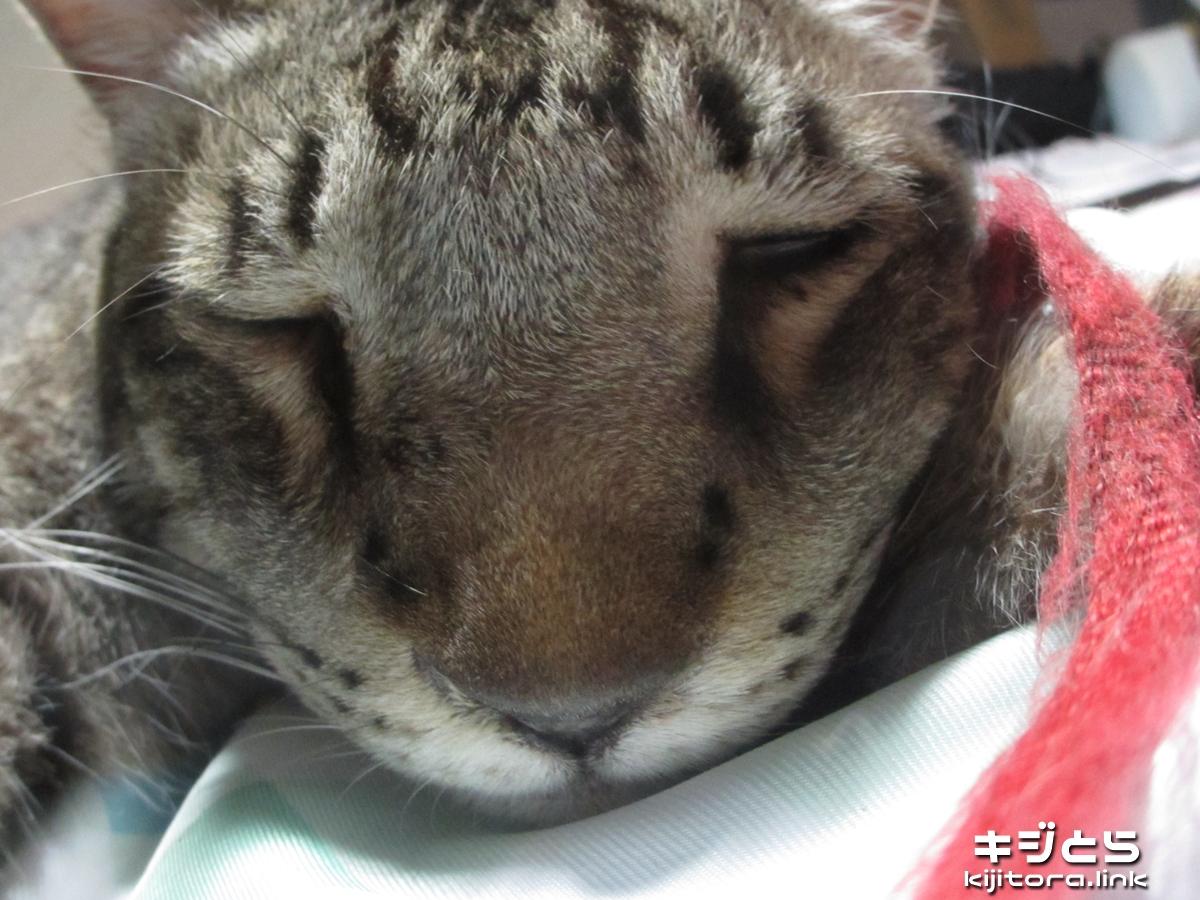 2016-07-05 魚眼モードで撮影した猫の寝顔は不細工