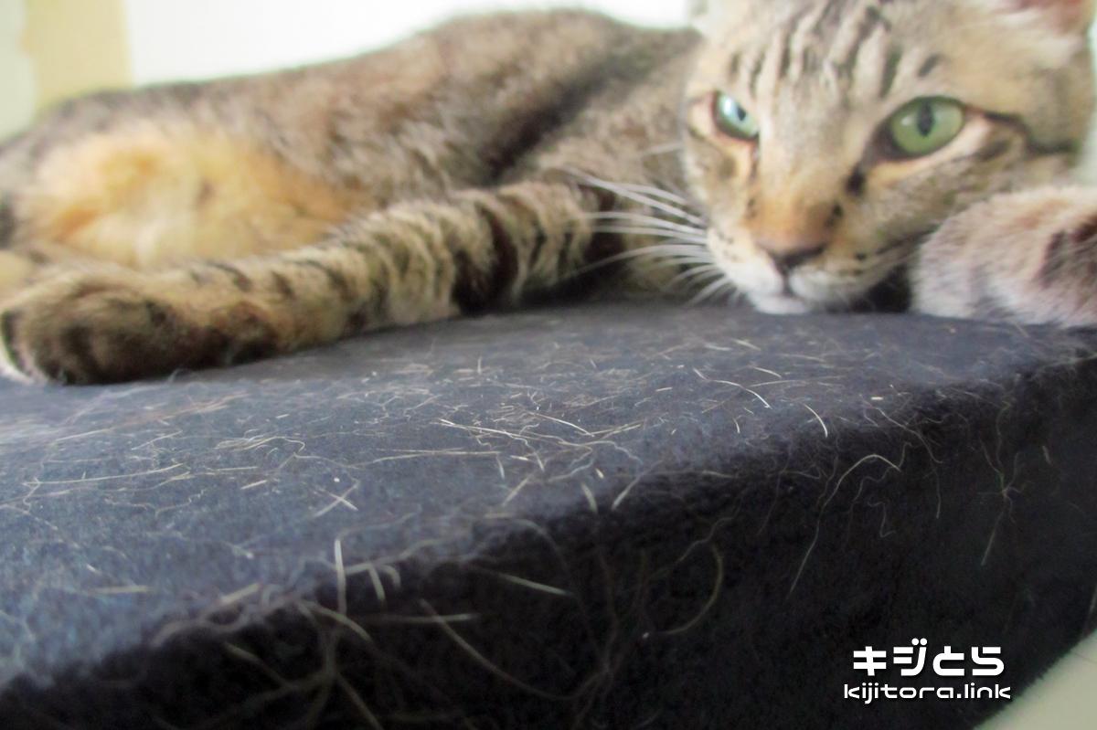 2016-07-09 猫の毛まみれになったクッション