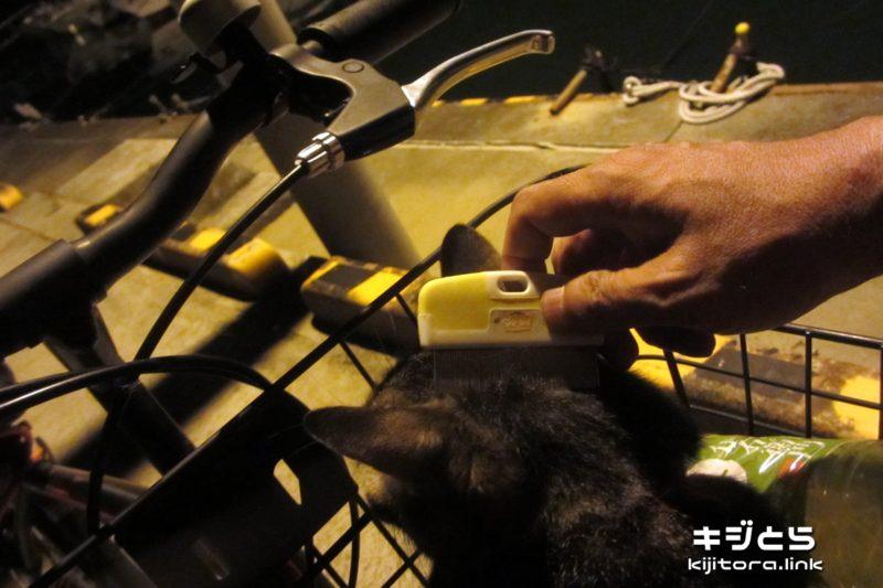 2016-07-06 猫を自転車の前カゴに乗せて頭をブラッシング