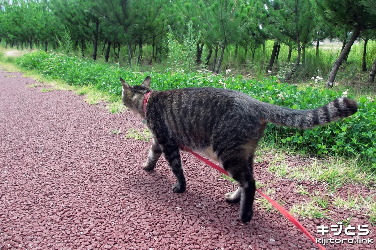 2016-07-05 ニャンコの散歩