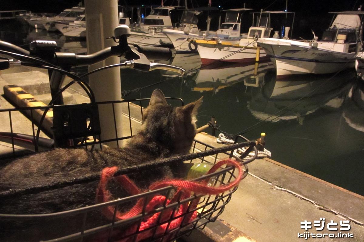 2016-07-06 夜の漁港、気分はセレブ?