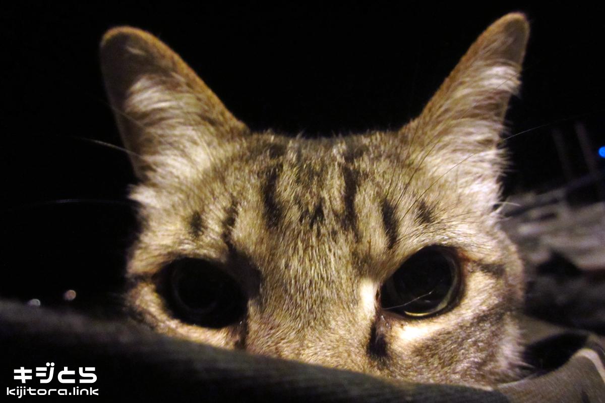 2016-07-12 瞳の大きなキジトラ猫
