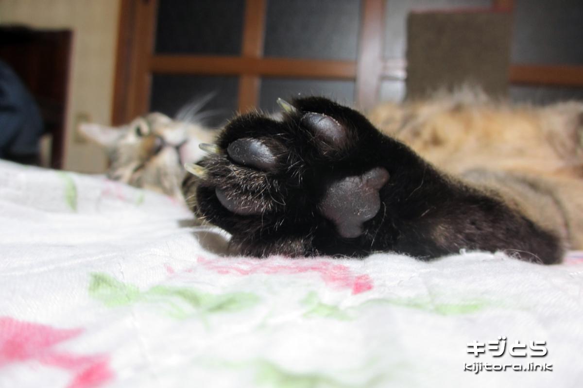 2016-07-05 キジトラ猫の後ろ足の肉球