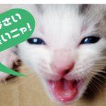ドクターXの看板猫!ベン・ケーシーの個人情報を調べたよ