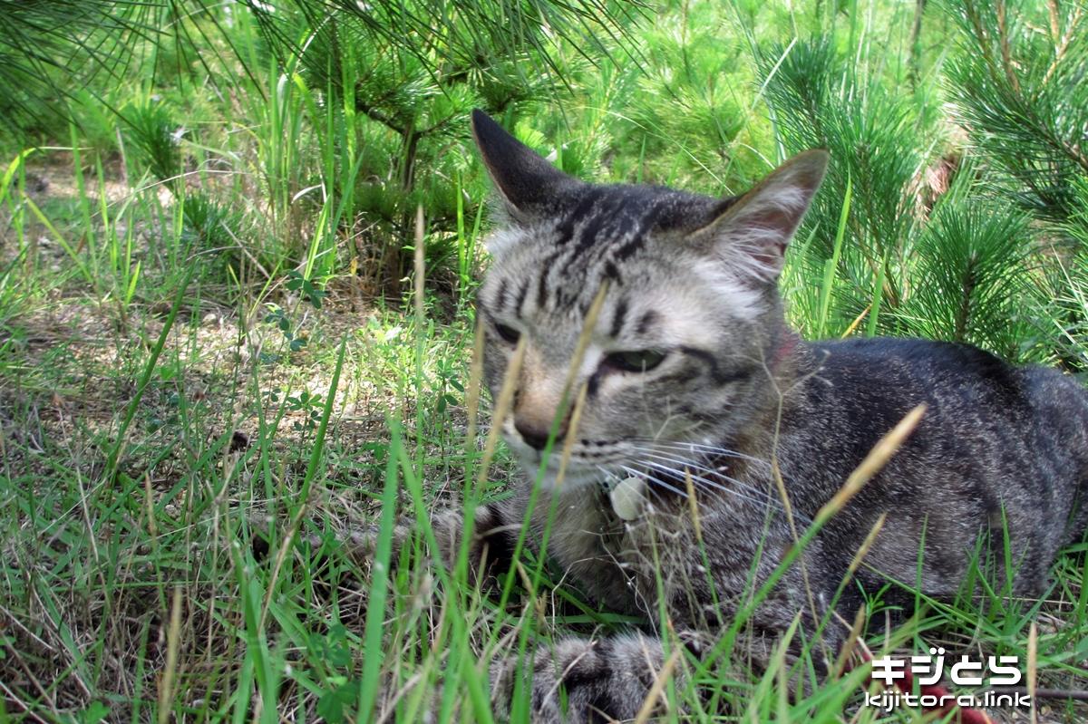 2016-07-05 木陰で寝そべる猫