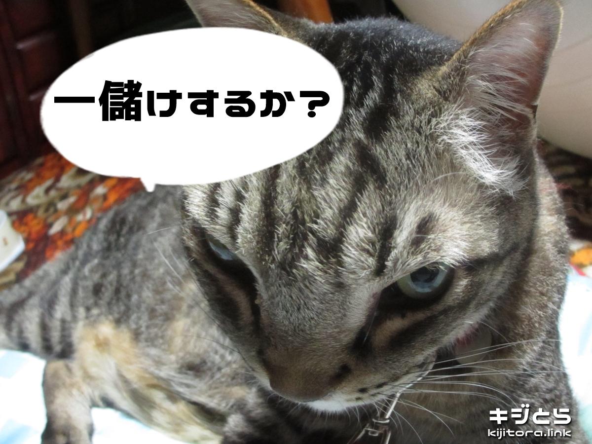 2016-07-05 猫で一儲けするか?