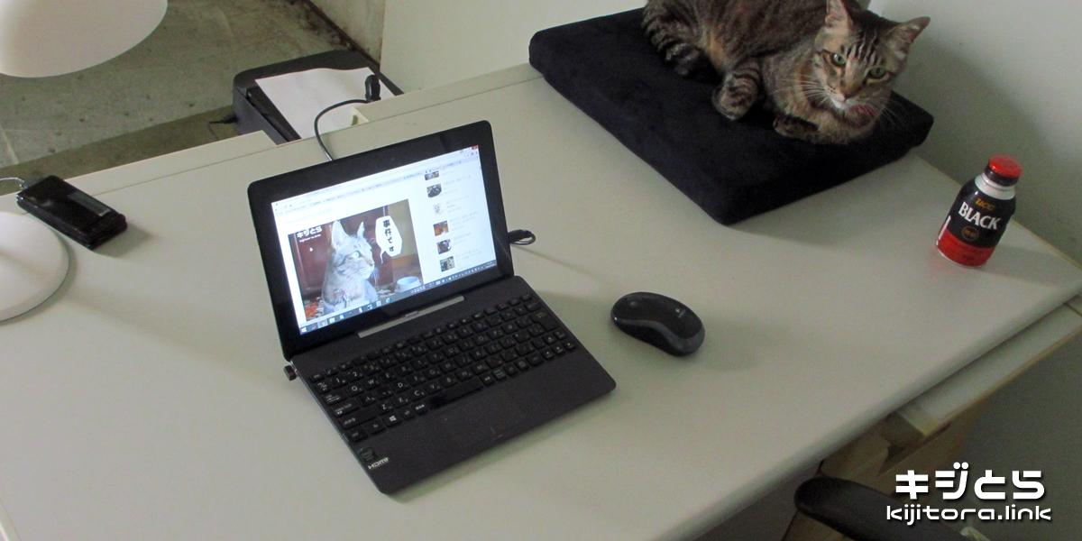 2016-07-09 事務所での猫の定位置