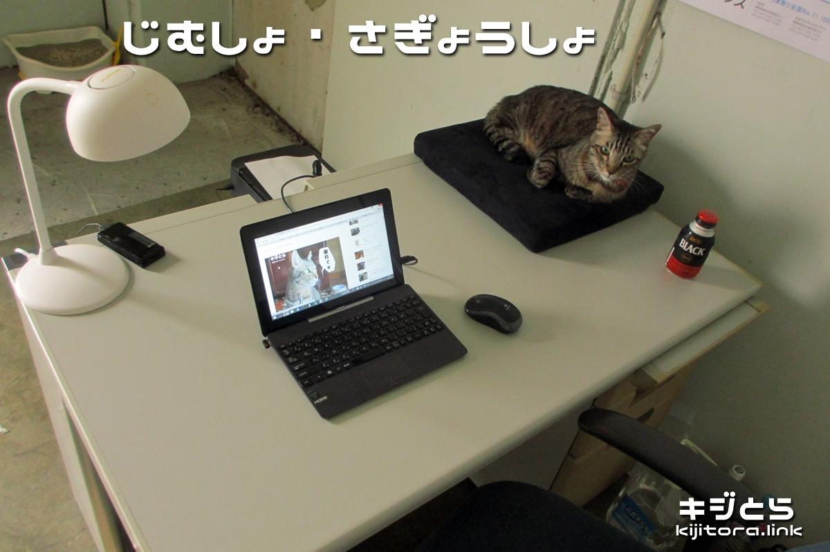 2016-07-09 事務所で監視する猫