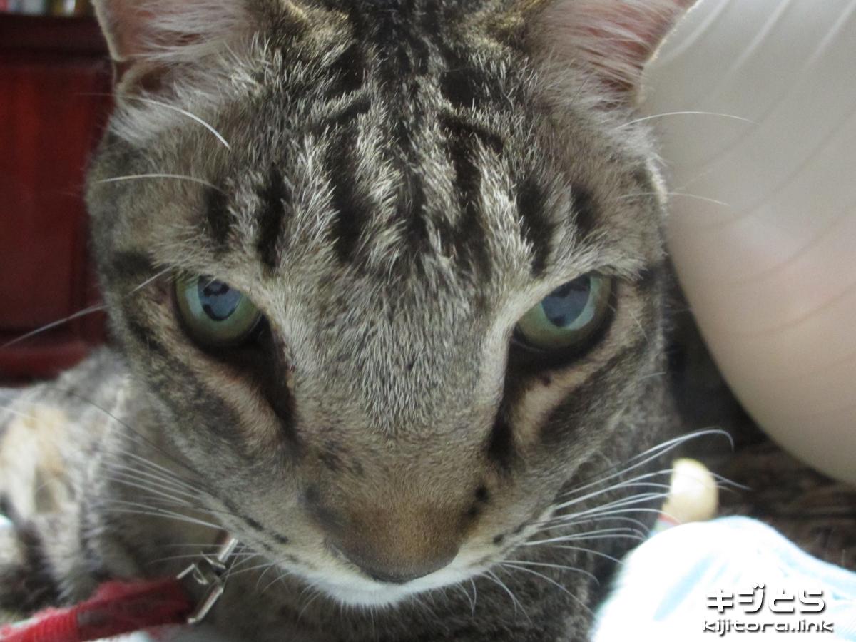 2016-07-05 魚眼モードで撮影した猫