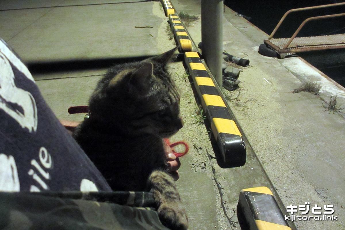 2016-07-06 漁港で猫のお散歩、猫の抱っこひもは便利