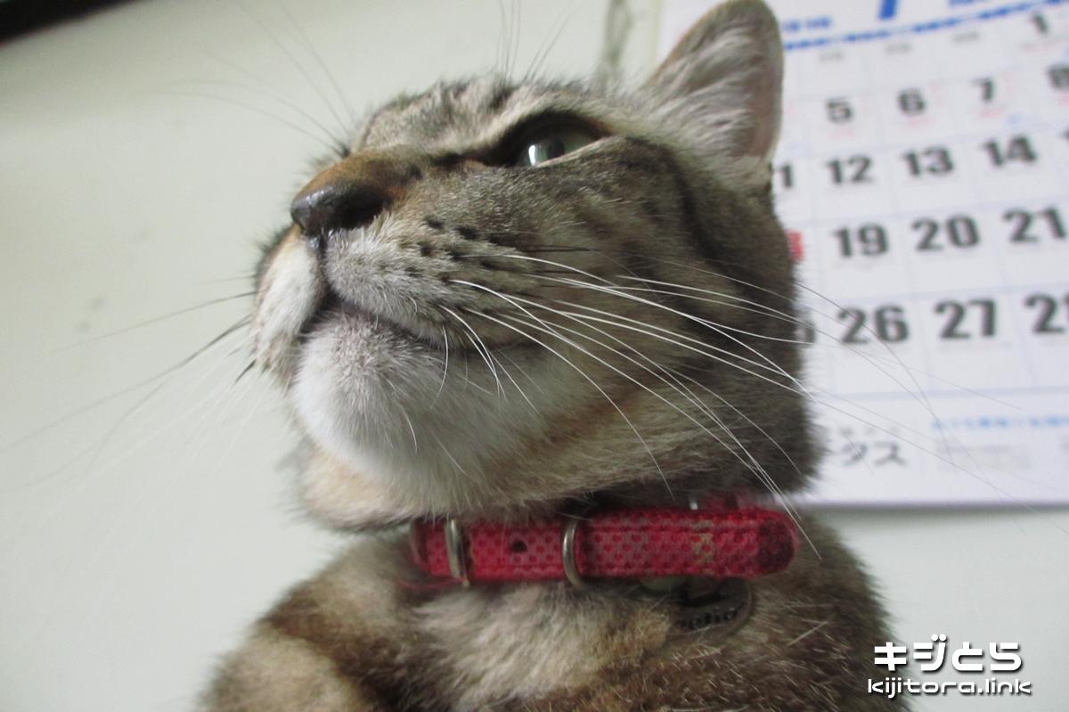 2016-07-09 頼もしい顔をする猫