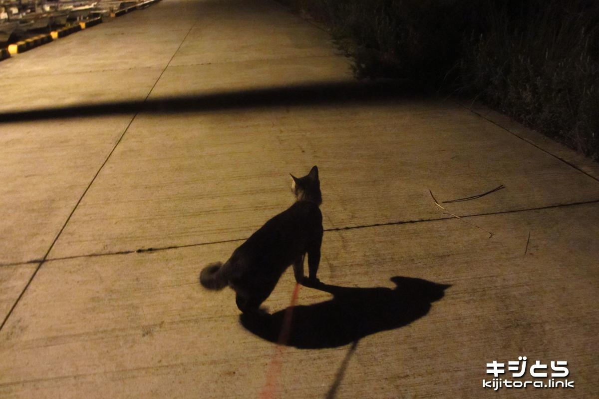2016-07-12 夜の漁港で佇む猫