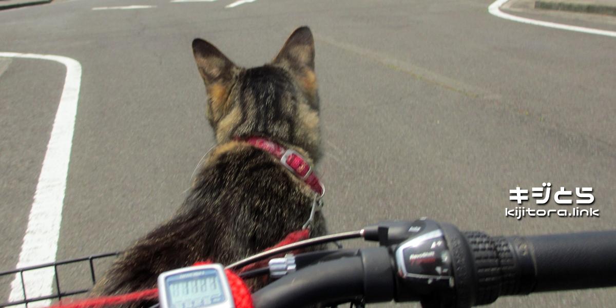 2016-07-05 自転車の前カゴに乗る猫