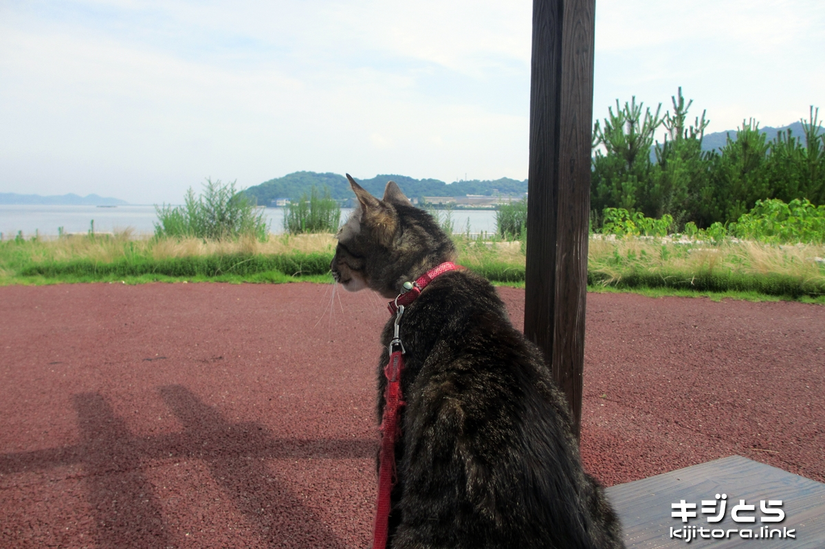 2016-07-05 キジトラ猫のお散歩(休憩中)